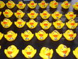 2011-A-15-Duck-race-Bild-044